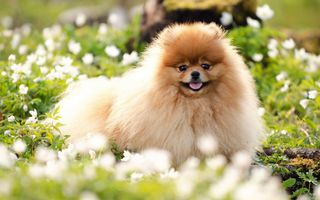 Фото бесплатно цветы, трава, собака