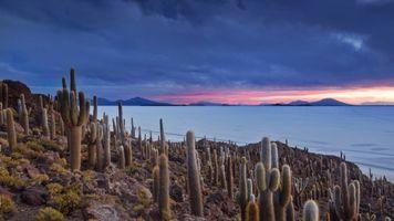 Бесплатные фото кактус,природа,небо,Боливия,растения