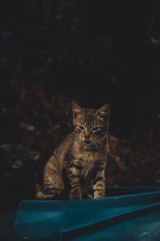 Photo free cat, tongue, cute