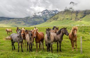 Фото бесплатно лошади, поле, облака