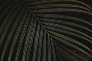 Бесплатные фото лист, папоротник, зеленый, leaf, carved, plant, green