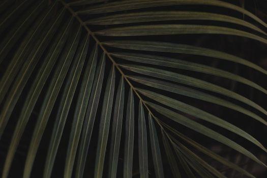 Заставки лист, папоротник, зеленый