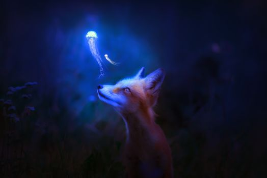Фото бесплатно лисица, ночь, свет