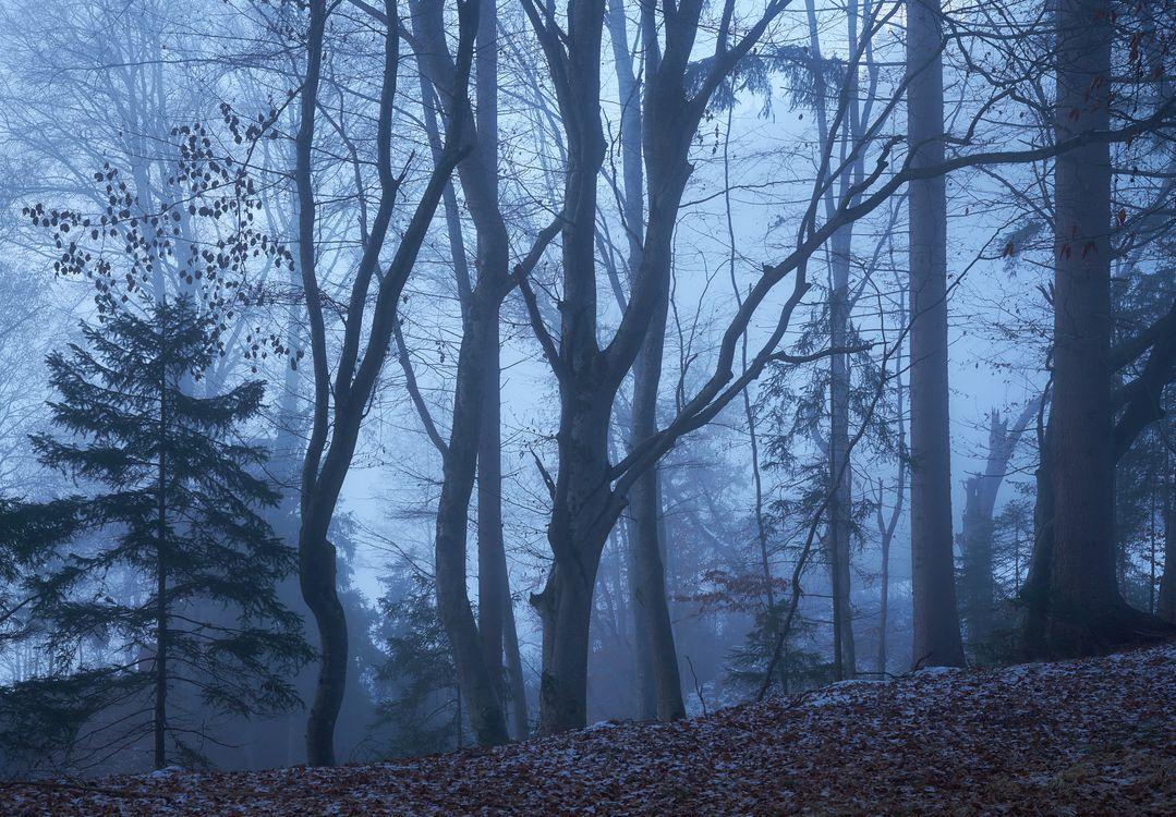 Фото пейзаж, деревья больших размеров
