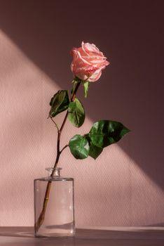 Бесплатные фото лепесток,цветок,макро,природа,растение,блоггер,женщина,макияж,розовая роза,стеклянная ваза,листья,тень