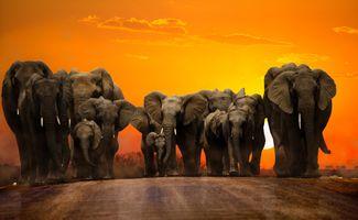 Фото бесплатно закат, дорога, слоны