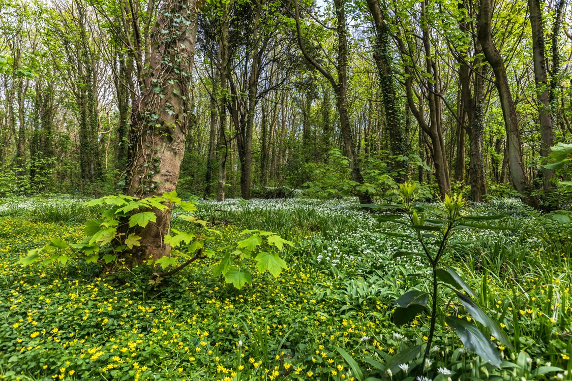 Фото бесплатно лес, деревья, цветы, природа, природа