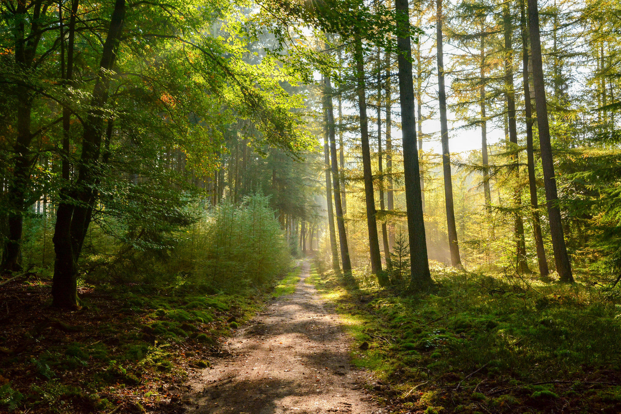 Обои лес, деревья, дорога, пейзаж