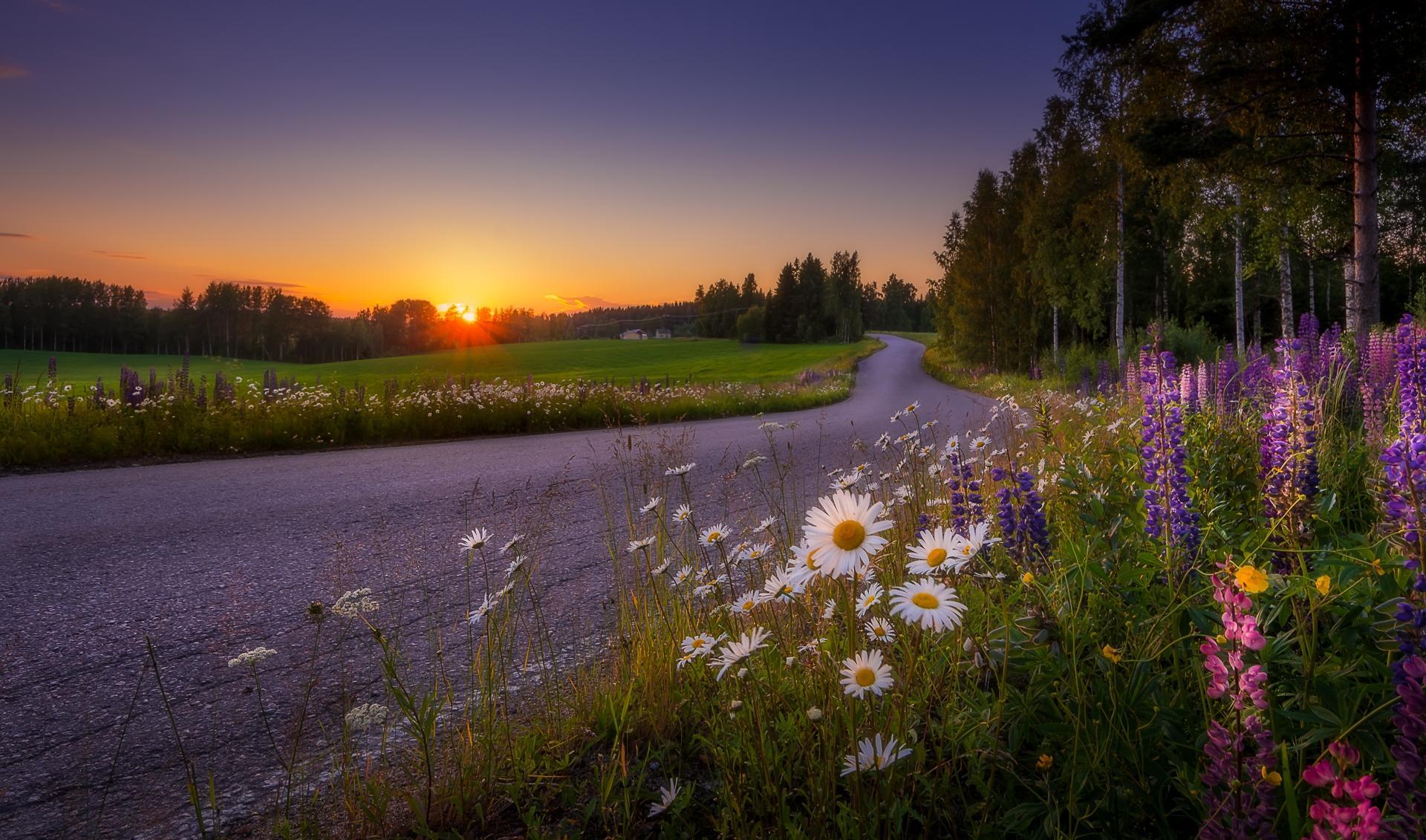 Обои закат, дорога, поле, цветы