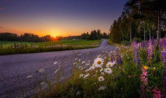 Бесплатные фото закат,дорога,поле,цветы,деревья,пейзаж,Финляндия