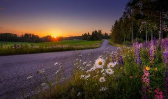 Фото бесплатно Финляндия, дорога, цветы
