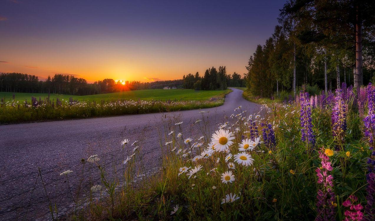 Фото бесплатно закат, дорога, поле, цветы, деревья, пейзаж, Финляндия, пейзажи
