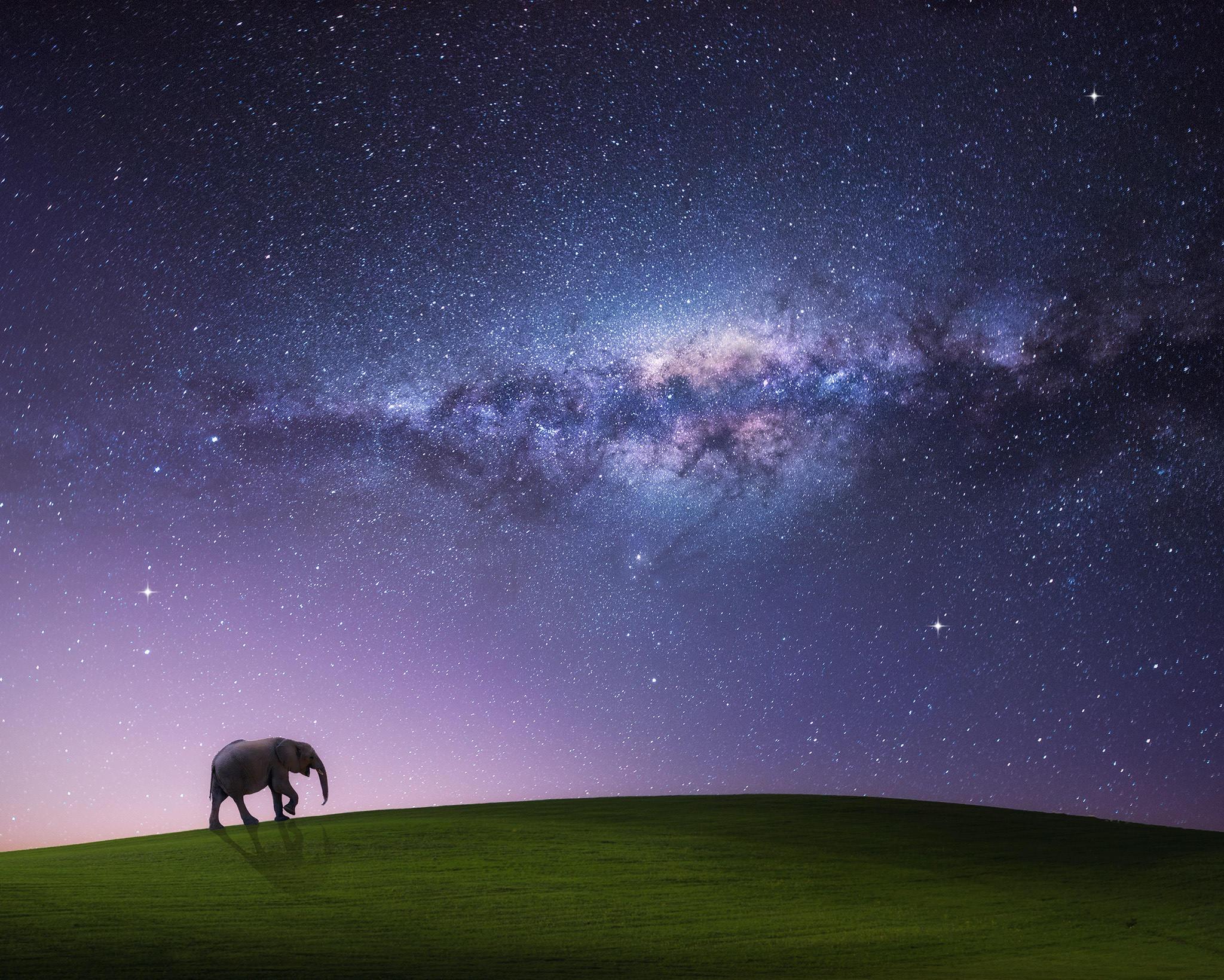 Обои холм, слон, сияние, art