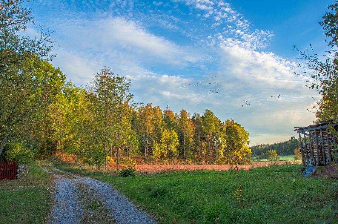 Фото бесплатно осень, поле, деревья - на рабочий стол
