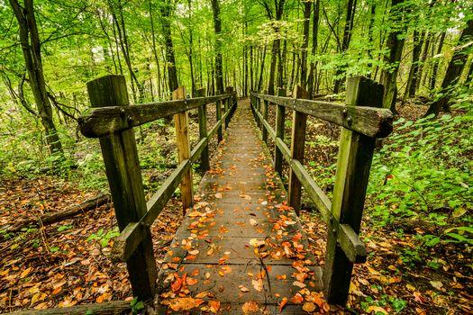 Фото бесплатно лес, деревья, деревянный настил, природа, пейзаж