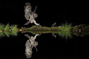 Заставки ночь,водоём,сова,хищник,отражение