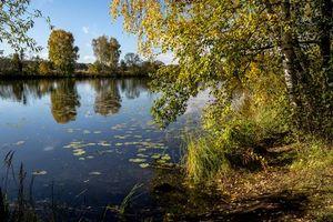 Бесплатные фото Архангельское,Красногорский район,Московская область,Россия,осень,река,деревья