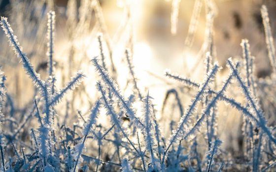 Photo free hoarfrost, frost, sunlight