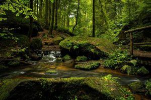 Фото бесплатно мост, деревья, камни