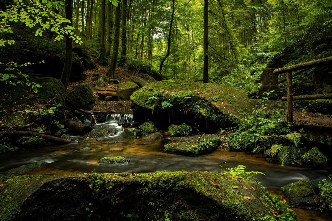 Фото мост деревья камни - бесплатные картинки на Fonwall