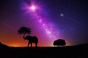 Бесплатные фото ночь,сияние,силуэты,дерево,слон,art