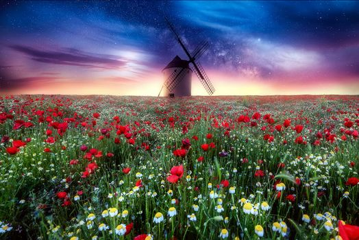 Photo free sunset, windmill, daisies