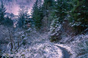 Фото бесплатно зима, сумерки, лес