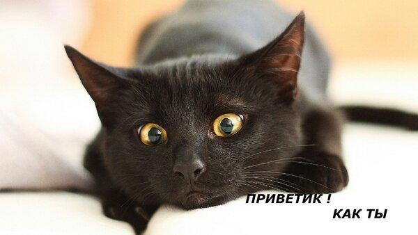 Postcard free cat, tex, hi there