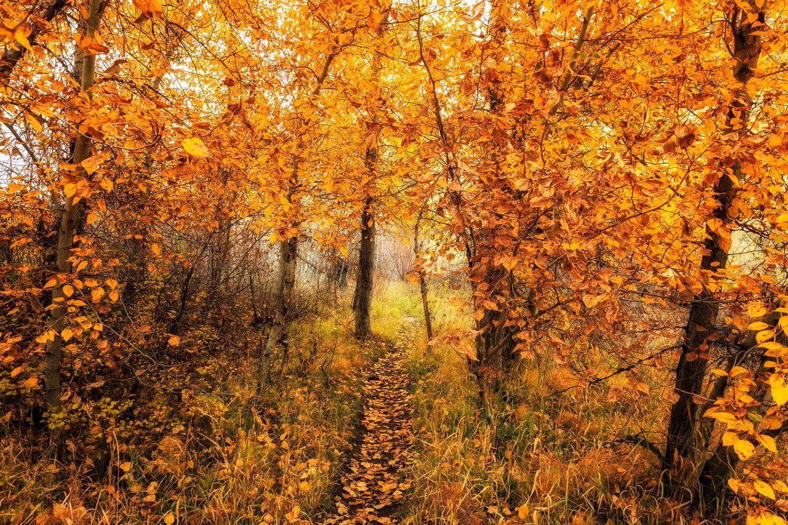 Фото бесплатно осень, лес, деревья, тропинка, природа, природа