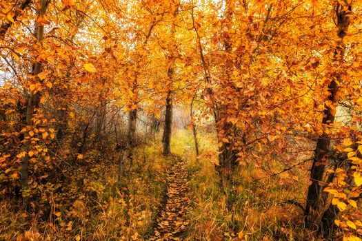 Photo free autumn, Pathway, road in the forest