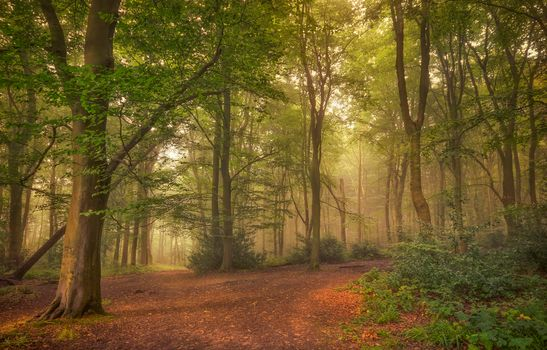 Заставка на телефон лес, туман