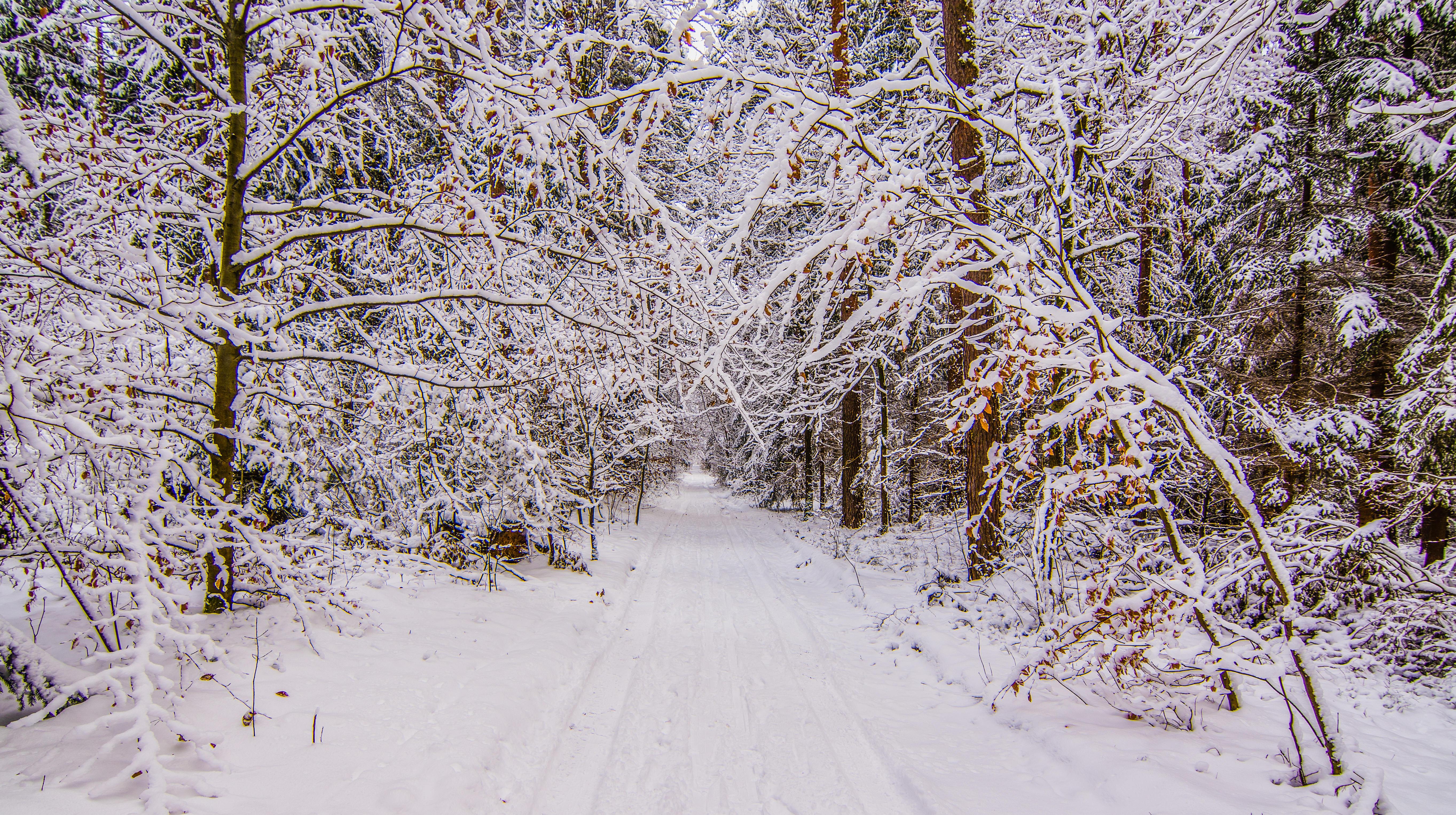 Обои зима, снег, лес, деревья