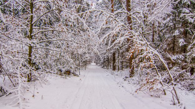 Photo free snow in the forest, landscape, snow on trees