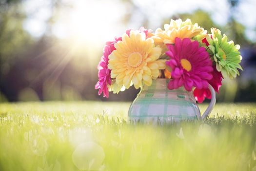 Photo free bright, bouquet, flowers in pitcher