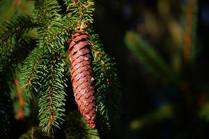 Фото бесплатно ветви, природа, макросъемка