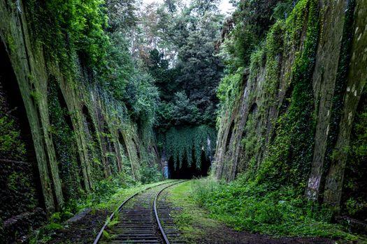 Photo free habitat, tunnel, jungle