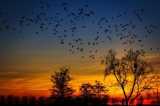 Фото бесплатно птицы, закат, деревья