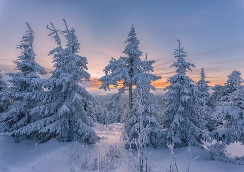 Фото бесплатно ель, закат, пейзаж