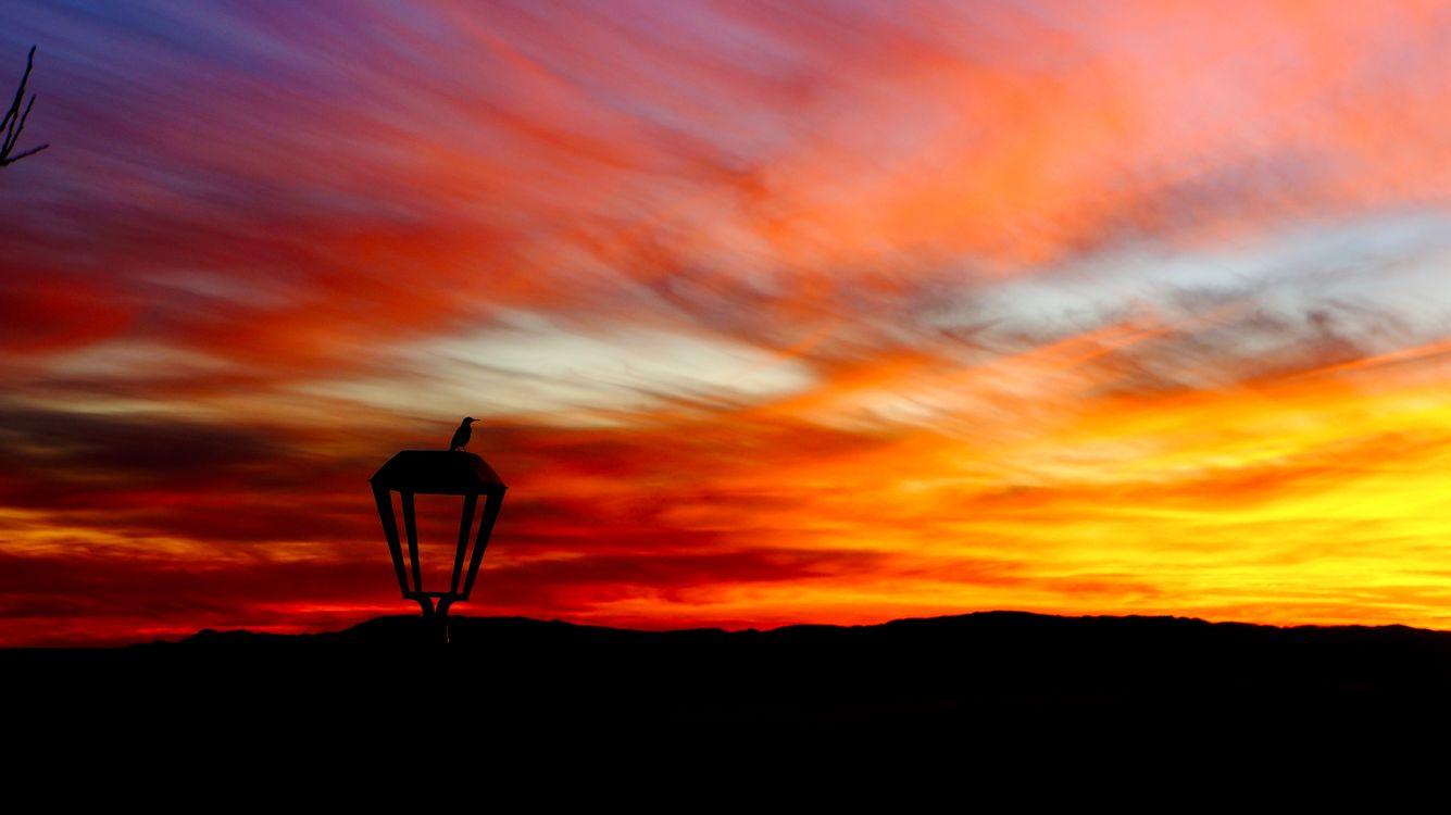 Фото бесплатно фонарь, птица, силуэт, закат, lantern, bird, silhouette, sunset, пейзажи