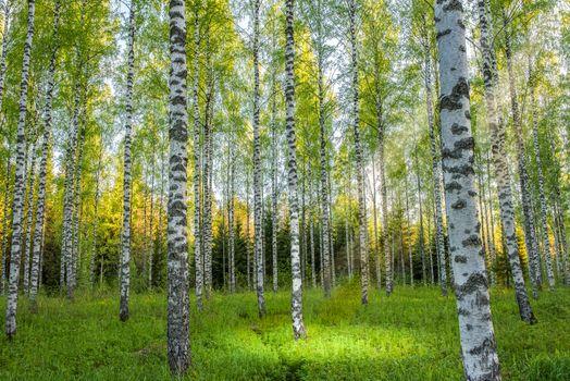 Заставки лес,деревья,поляна,берёзы,природа,пейзаж