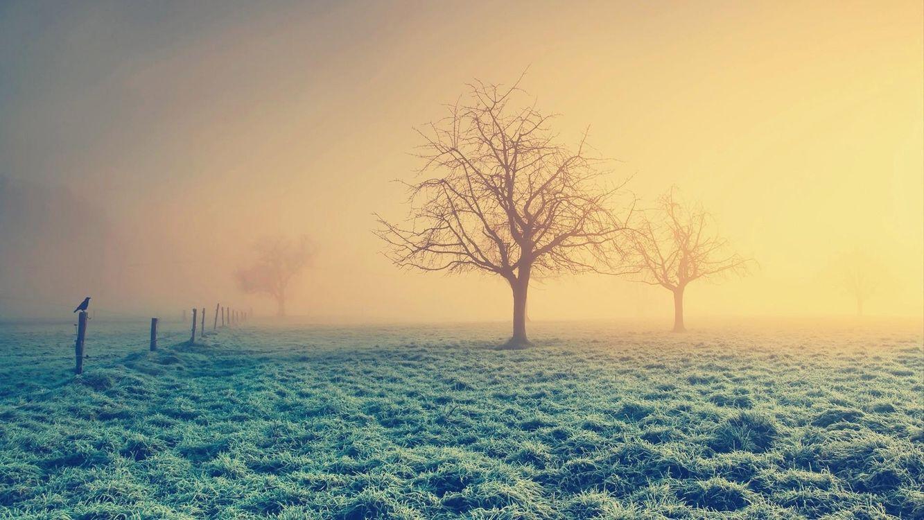 Фото бесплатно одинокие деревья, туман, ворона - на рабочий стол