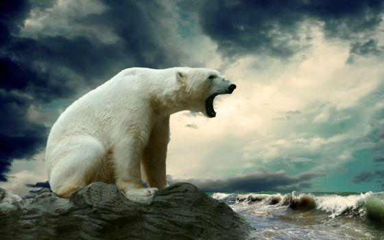 Фото бесплатно белый медведь, рев, волны