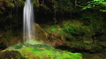 Фото бесплатно пейзаж, растительность, тропический лес