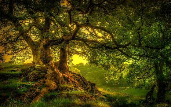 Фото бесплатно лес, раскидистое дерево, корни