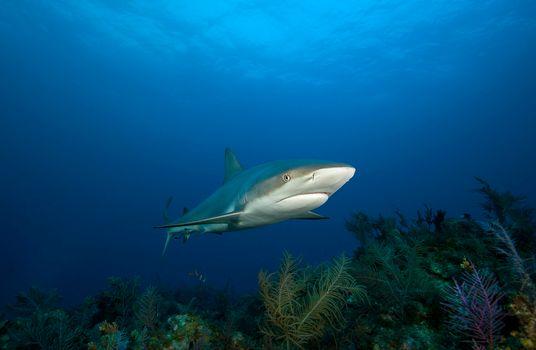 Море бесплатные, акула красивые обои на рабочий стол