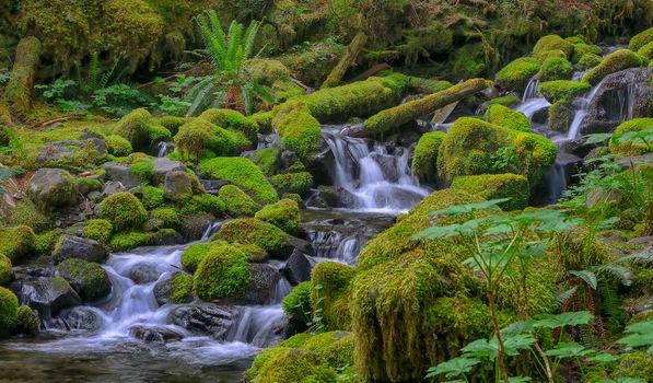 Фото бесплатно Olympic National Park, водопад, речка