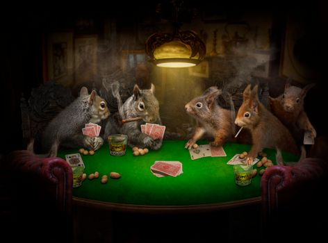 Funny squirrel gamblers