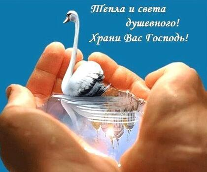 Postcard free good morning god bless you, white swan, request