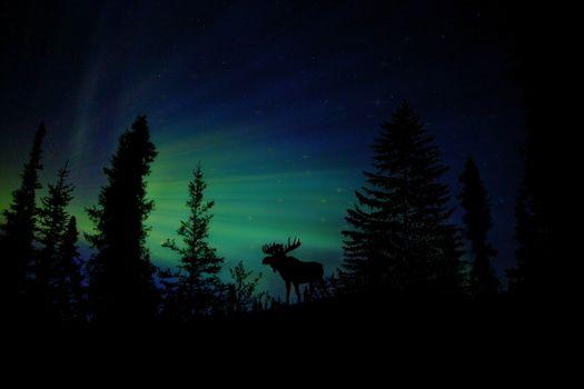 Photo free moose, animals, silhouette