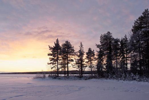 Заставки снег, закат, лес хвойный